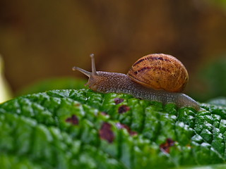 Slug is going on the leaf way | by Ciddi Biri