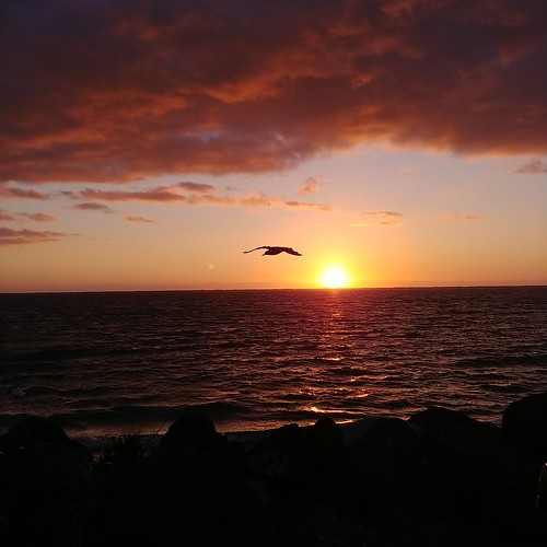 instagram seagull sunset olympicpeninsula pacificnorthwest
