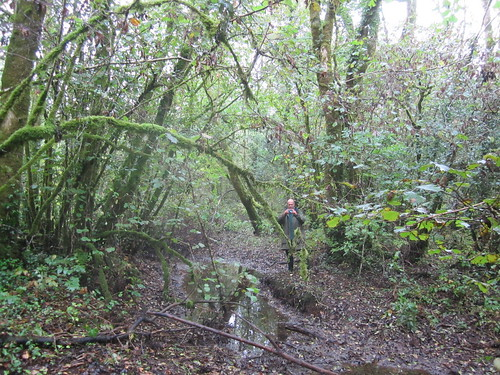 wet woodland The Gearagh, photo by Micheline Sheehy-Skeffington | by Irish Ramsar Wetlands