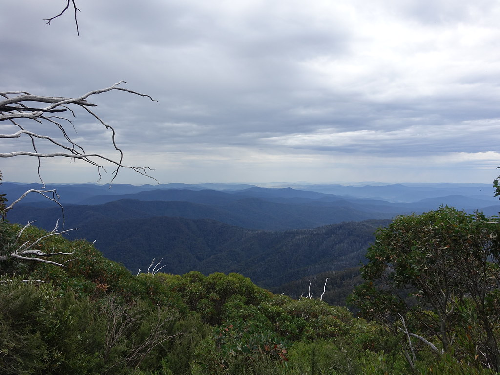Forest view, Mount Bogong