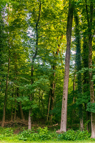 greenwaylandtrustprotected childhood wood woods princeton a7rii beautiful composition color trees tree wideangle 35mm fe35f14 sigma art sigmaart b c depthoffield dof fullframe frame focus illuminated leadinglines light lines landscape leaves sunlight mirrorless nature ngc peaceful prime pointofview pov nostalgia quiet tranquil sony sonya7rii season vivid green newjersey mercercounty summer june verte verdent