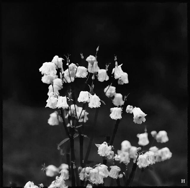 Flowers Jan Hill