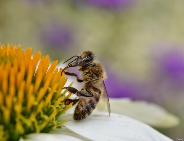 Industrious bee! 🐝