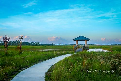 walkway sidewalk marsh observationdeck landscape nature mothernature pineglades naturalarea pinegladesnaturalarea jupiter florida