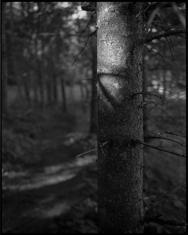 tree trunk , broken limbs, deep forest, speckled light, Owl's Head, Maine, Koni Omega Rapid 100, Super Omegon 90mm f-3.5, Arista.Edu 200, Ilford Ilfosol 3 developer, 7.18.18