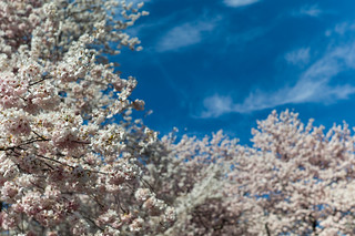 Spring in NYC | by Mahler_seele