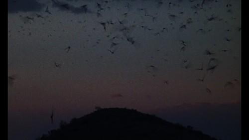 Screen Shot 2018-07-15 at 6.52.38 AM | by dustinchang