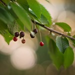 20180713-214557 - Fruit Nature Bokeh
