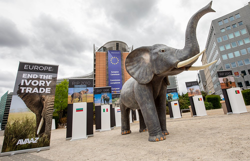 Avaaz Illegal Ivory display in front of EU Commission | by Avaazorg
