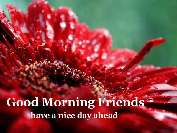 Good Morning Friends Have A Nice Day Ahead Wg16257 600x450 Flickr