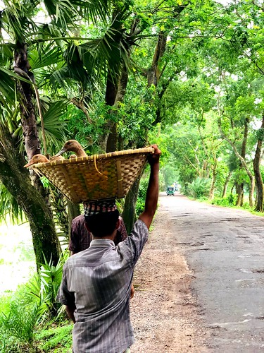 countrylife bangladesh iphonexphotography