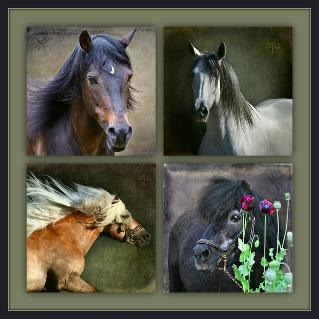 New Forest stallion . . . Andalusian mare . . . Haflinger mare . . . Miniature horse stallion