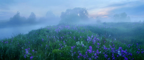 fog dew river dawn flowers damesrocket grandriver wellington county ontario canada
