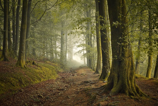 Welsh forest