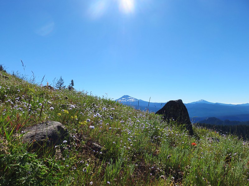 South Sister and Mt. Bachelor from the Horsepasture Mountain Trail