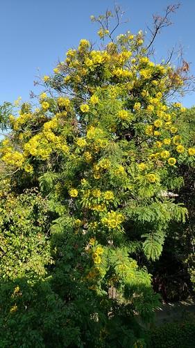 tree sky landscape zajdowicz pasadena california flora usa cellphone samsung color