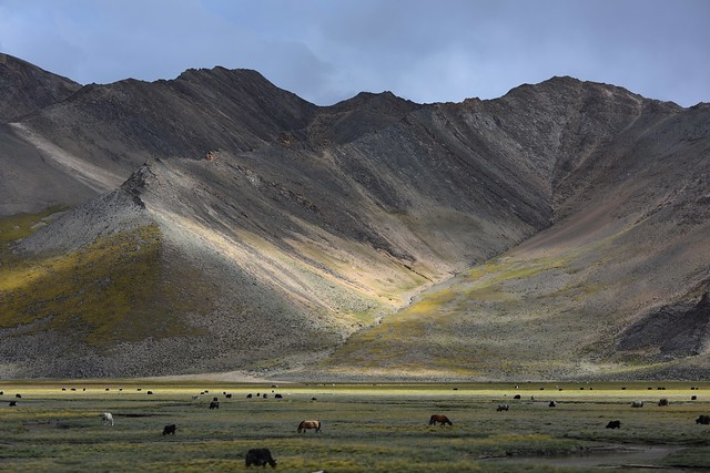 Landscape with Yak and Horses, Tibet 2017