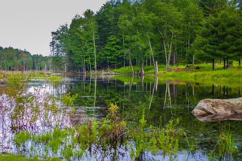 water reflections trees stream landscape sullivancounty canon5dmkii tamron45mm