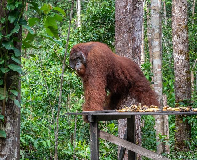 Borneo-48