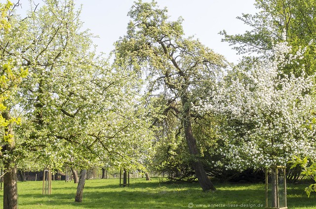 Streuobstwiese / Meadow orchard 10