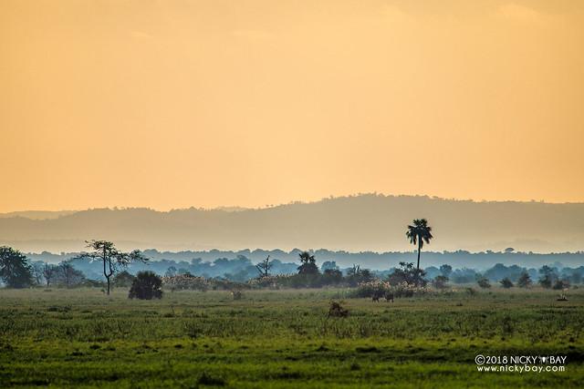Gorongosa sunset - DSC_6581