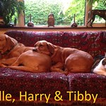 Belle, Harry & tibby