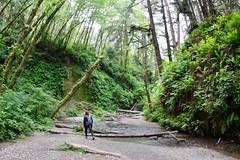 Follow the creek in Fern Canyon