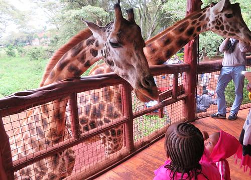 giraffe-centre-kids-visit | by quirkytravelguy
