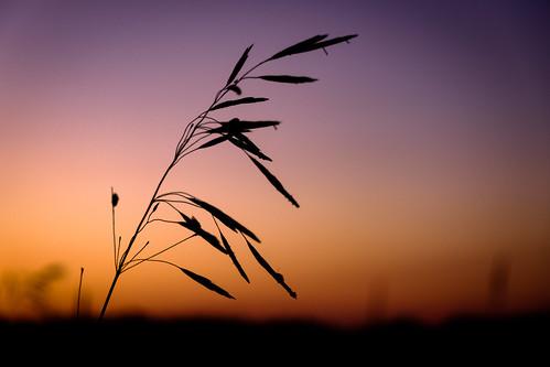 sunset nature silhouette plant wildlife sunlight sun colorful sunshine contrast fujifilmxt2 fujixt2 fujifilm fuji xt2 xf1855mmf284rlmois xf1855 fujifilm1855 richmond vermont vt unitedstatesofamerica usa america fav10 fav25 fav50