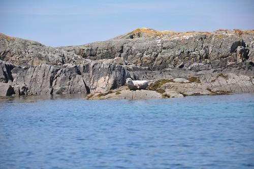 Skerry Seal