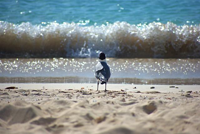 The Sand, Seagull and Sea