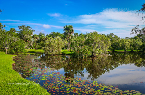 landscape trees lilypads water pond lake reflect reflection perimeter park sky bluesky weather nature mothernature whitecitypark fortpierce florida usa outdoors greatoutdoors