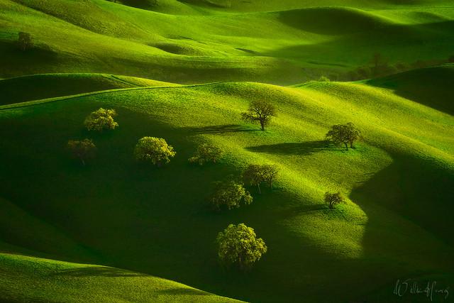 Oak Pasture
