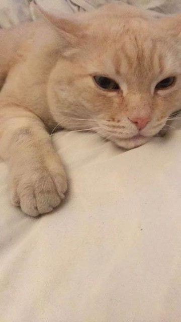 Lost orange cat in #mission Pls rt watch share help to find Noodles! YYC Pet Recovery shared Alyssa Dawn Wright's post. Noodles been missing for a few days. Mission area, he's used of being outside however he comes home daily. 2018-07-25T23:28:06.000Z by
