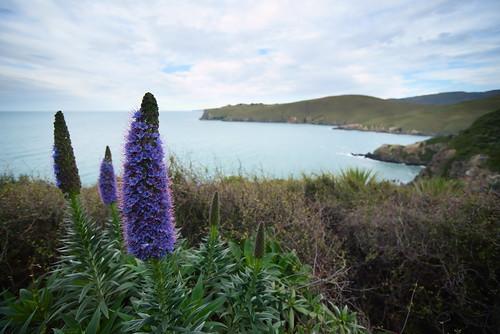 walkway walk flowers sea coast coastal canterbury newzealand sigma1530f3545 pentax pentaxk1 pride madeira
