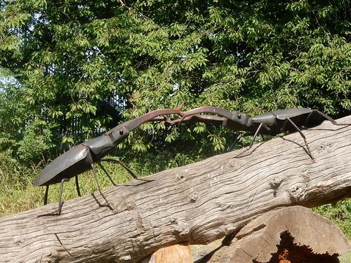 Stag beetles Cheshunt to Broxbourne