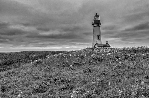 yaquina head lighthouse blackandwhite monochrome grass flowers coast pacific clouds
