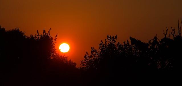 Red Sun Silhouette