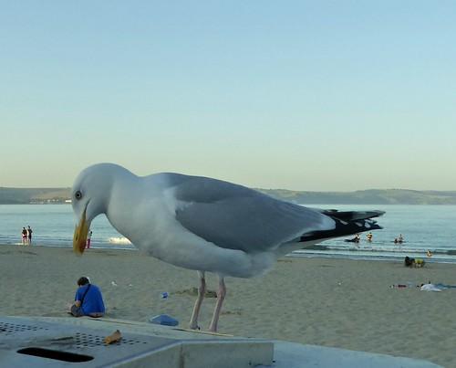 Giant Seagulls.