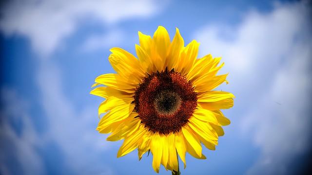 Sun Shine - 5486