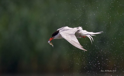 Catch, spin, dry... (Explored #28)   by Alan McCluskie