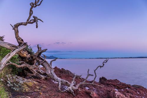 coast landscape manganesepoint nz newzealand northland whangareiharbour
