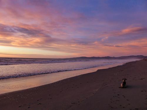 animal dog mauve purple pink blue sand newzealand nz southisland canterbury christchurch newbrighton beach ocean pacific sea surf waves winter dawn sunrise cloud sky perspective porthills