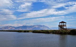 Bear River Migratory Bird Refuge | by Patricia Henschen