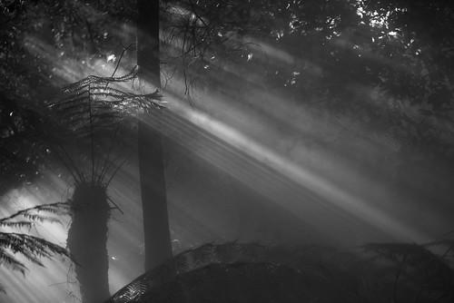canberra blackandwhite ferns light fog mist