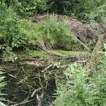 Naturbelassenes Altwasser der Ruhr in der Heisinger Ruhraue