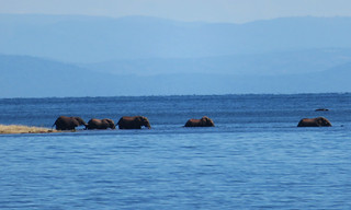 elephants-swimming-islands | by quirkytravelguy