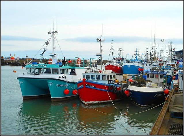 Shellfish Vessels in Harbour ..