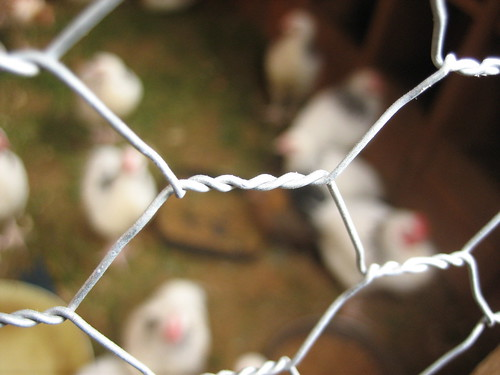 Chicken Wire | by Nanimo