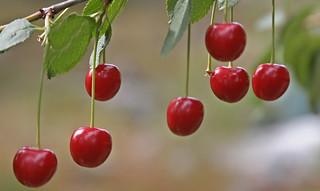 Missing Cherry III   by villoks